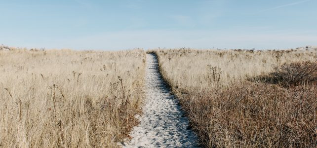 prairie, path, field