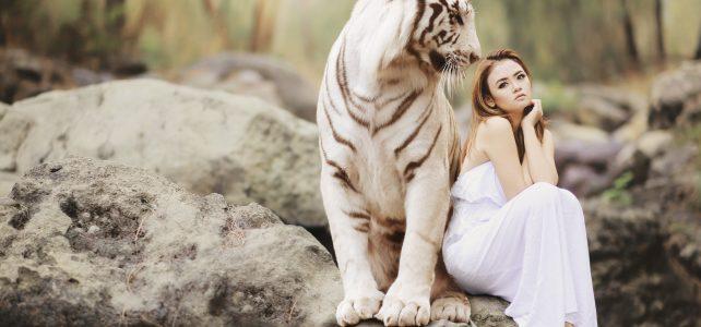 nature, wildlife, white bengal tiger